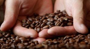 cual es el origen del café