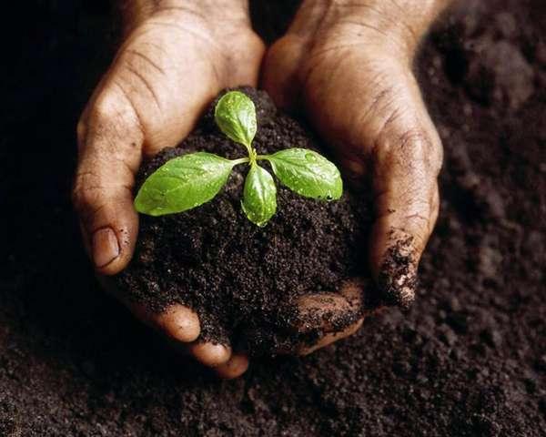 biodegradable-innovations-composting